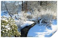 Winter Garden, Print