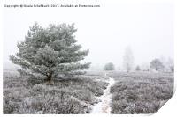 Frozen Heath, Print