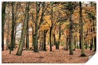 Autumn Splendour, Print