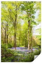 Bluebell Woods in Spring, Print