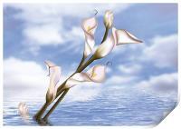 Callas In Water, Print