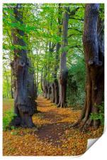 The Monk's Walk in the gardens of Guisborough Prio, Print