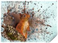 Red Squirrel in Danger, Print