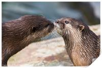 Asian small-clawed otter pair, Print