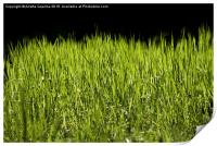 bright grass leaves grow on black background, Print