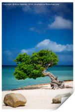 Lone Tree in Aruba, Print