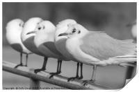 Row of Gulls, Print
