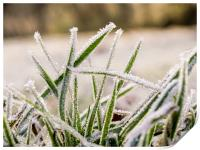 Frozen Grass, Print