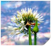 The Island of Flowers Madeira x3, Print
