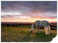 Sunset Horse, Print