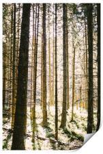 Sunlit Forest, Print