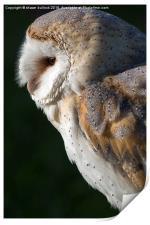 The barn owl, Print