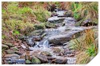 The stream, Print