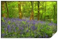 """""""Misty evening light in the bluebell wood"""", Print"""