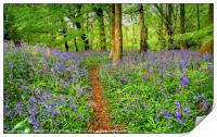 """Evening light in the bluebell wood 3"", Print"