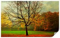 The Autumn Tree Hampstead  London , Print
