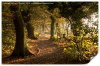 Meresands woodland, Print