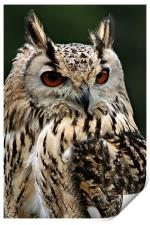 European Eagle Owl, Print