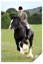 Shire Horse doing Dressage, Print