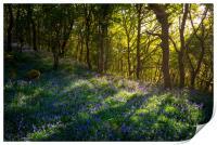 Sunbeams in a bluebell wood, Print