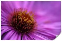 Purple, Print