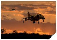 Hunting Harriers, Print