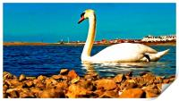 A beautiful swan on the lake , Print