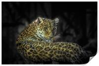 The Leopard, Print
