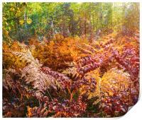Autumn fern, Print