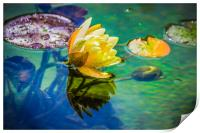 Water lily, Print