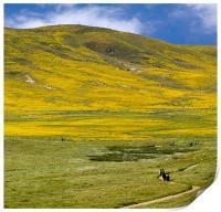 Spring landscape, California Poppy Reserve, Print