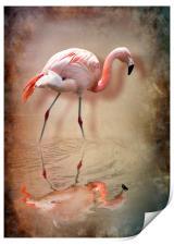 flamingo, Print