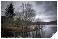 Dreamy trees near lake, Print