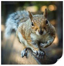 Squirrel in the park, Print