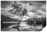 The Lone Tree, Llyn Padarn, Llanberis, Print