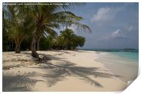 Palm lined beach, Print