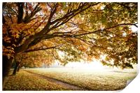Autumn Fall in morning light, Print