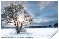 Bare tree in a snow field with early sunrise, Print