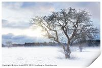 Bare tree in a snow field with sunrise, Print