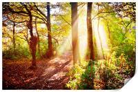 walk in the woods, Print