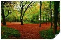 autumn trees, Print