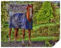 Horse in the Countryside, Print