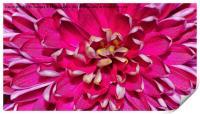 Flower macro, Print