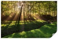 Spring morning sunrays in Hooleyhey woods, Print