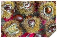 Autumn chestnuts, Print