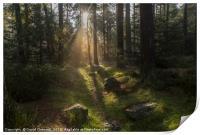 Forest Sunshine   , Print