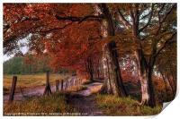 Ousbrough Woods-Autumnized, Print