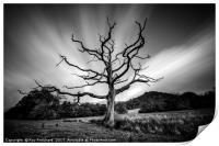 Dead Tree round Derwentwater , Print