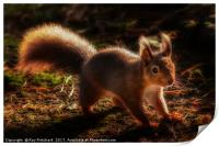 Red Squirrel or Squizz , Print