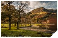 Buttermere Trees, Print